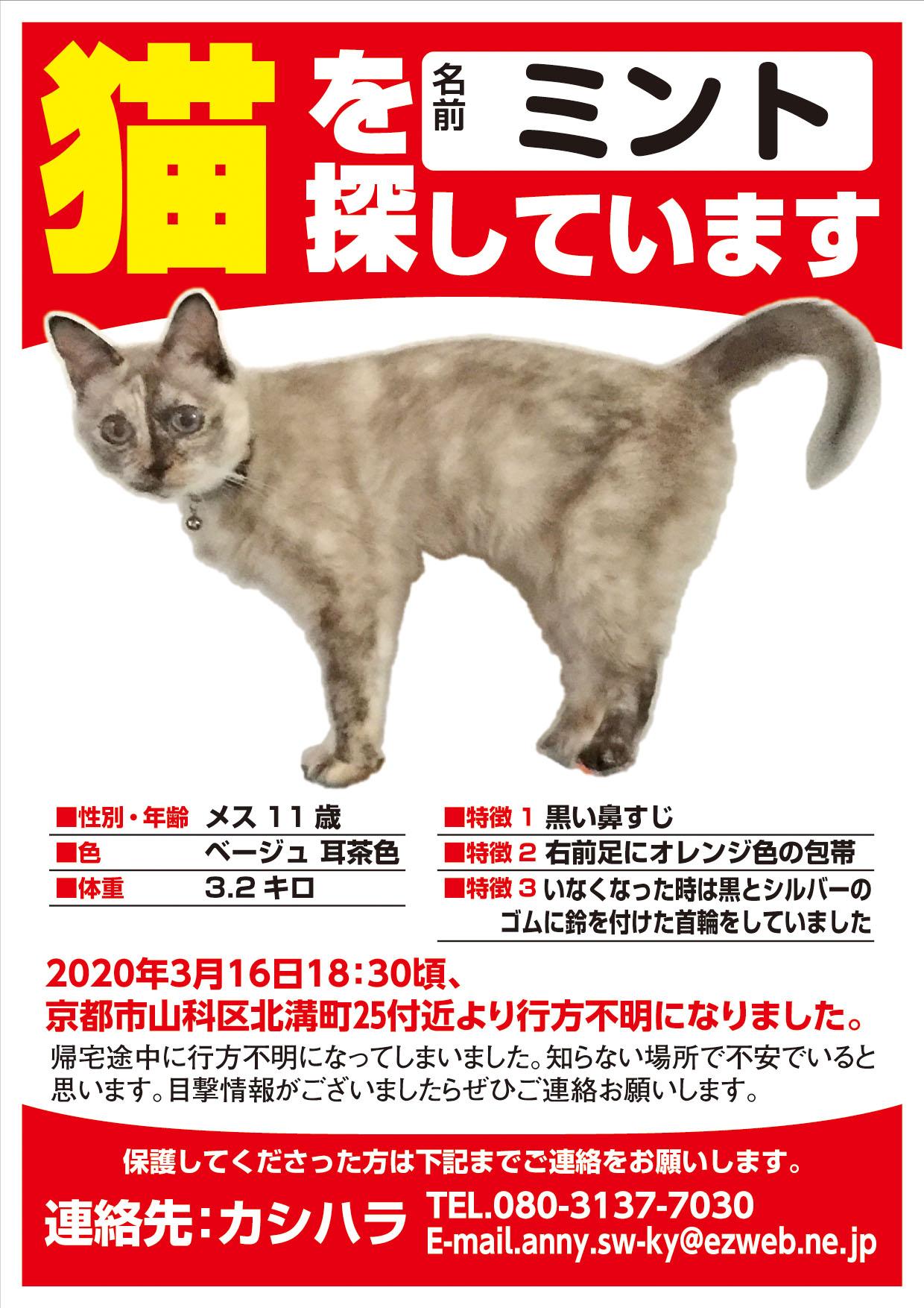 迷い猫 ミントちゃん
