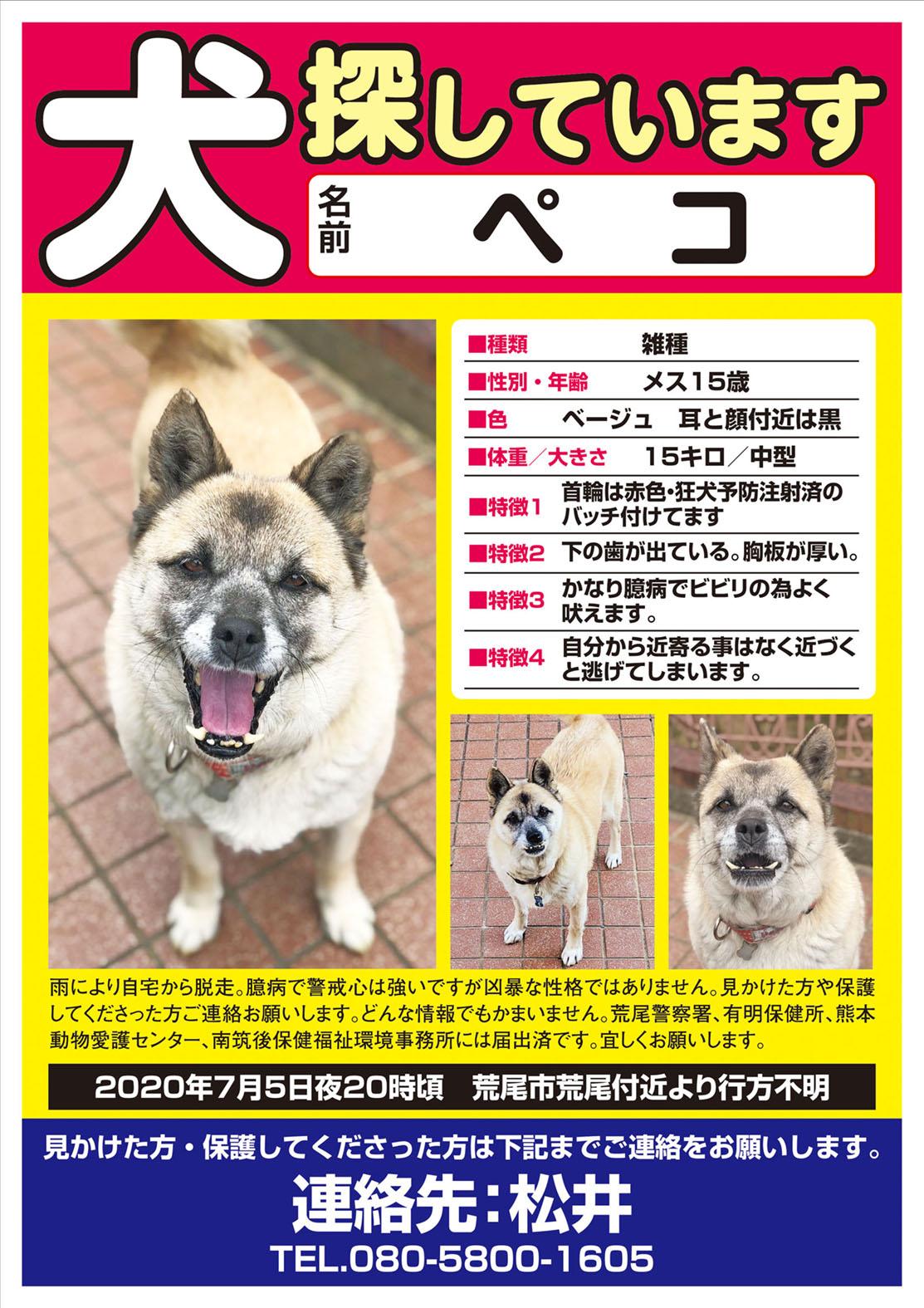 迷い犬 ペコちゃん