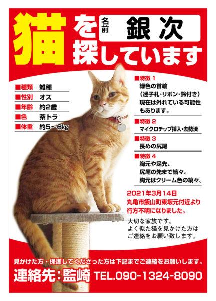 迷い猫 銀次ちゃん