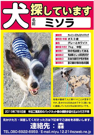 迷い犬 ミソラちゃん