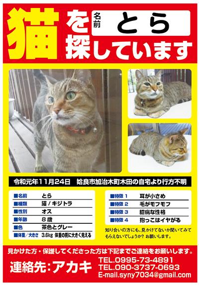 迷い猫 とらちゃん