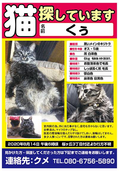 迷い猫 くぅちゃん