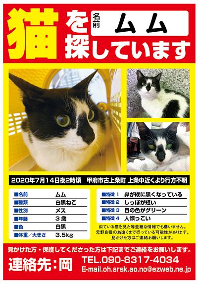 迷い猫 ムムちゃん