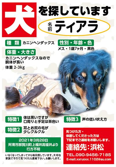 迷い犬 ティアラちゃん