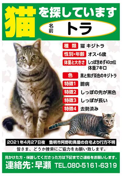 迷い猫 トラちゃん