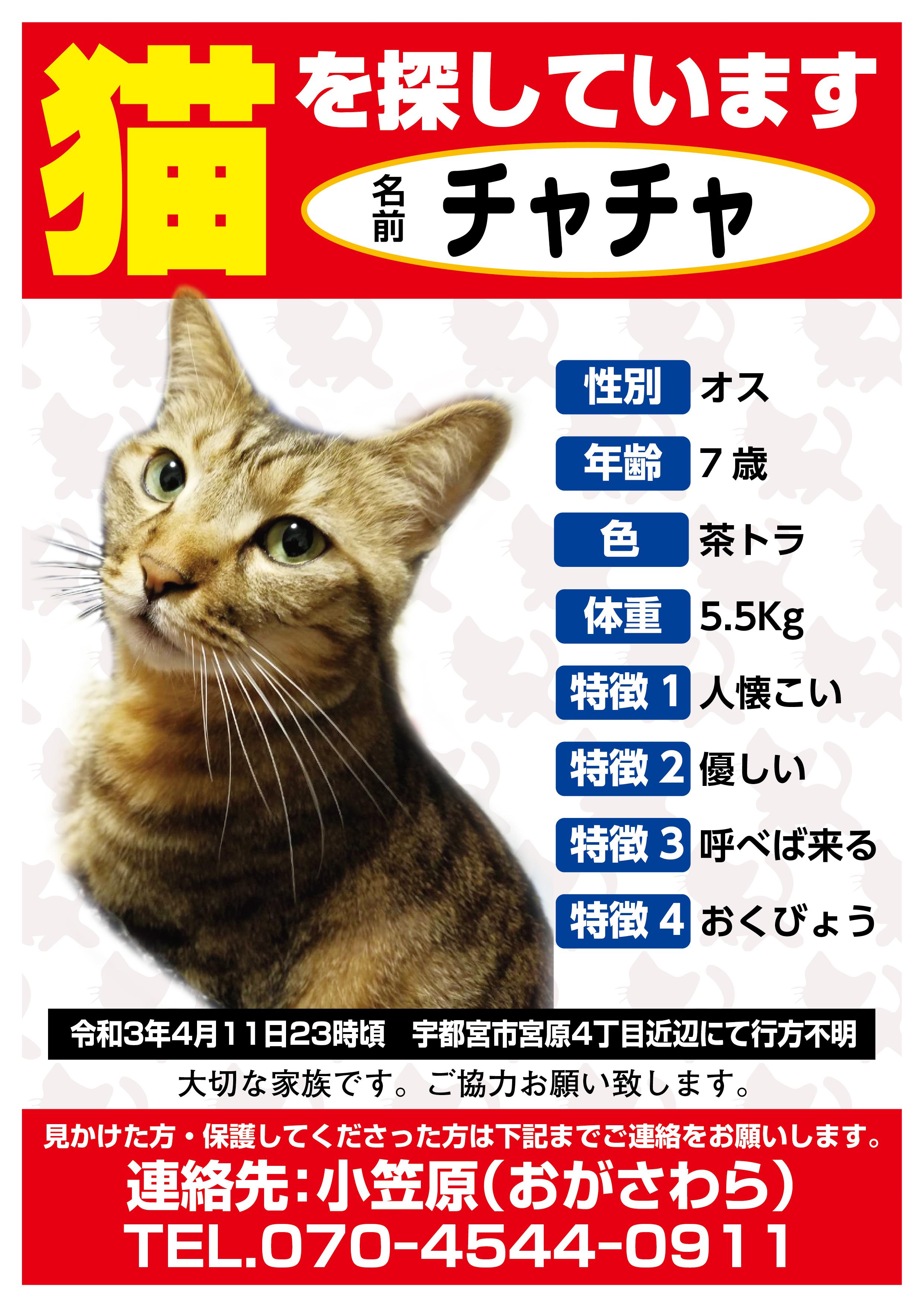 迷い猫 チャチャちゃん