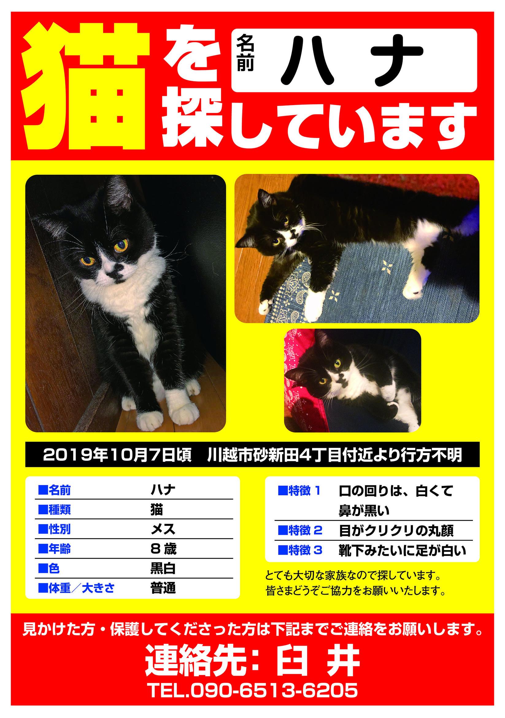 迷い猫 ハナちゃん