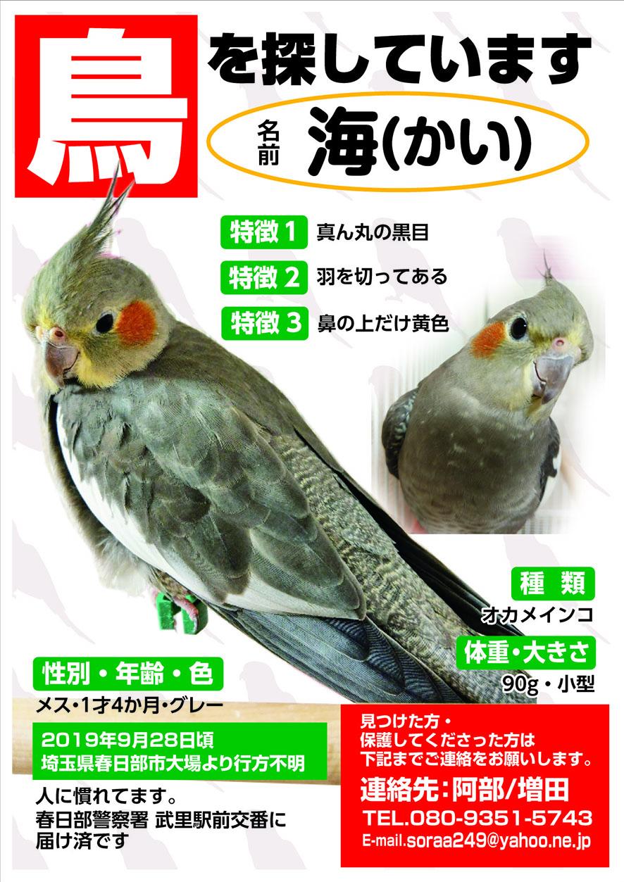 迷い鳥 海(カイ)ちゃん