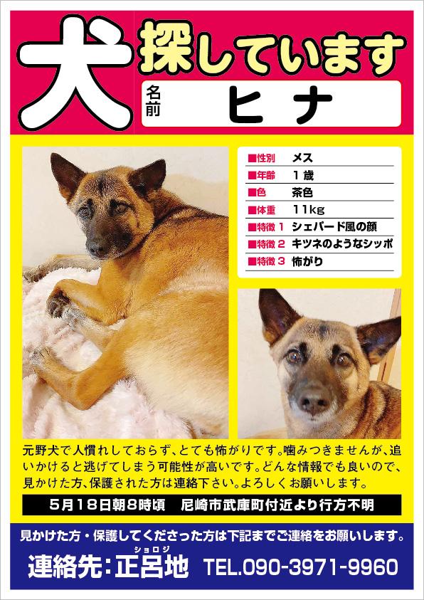 迷い犬 ヒナちゃん