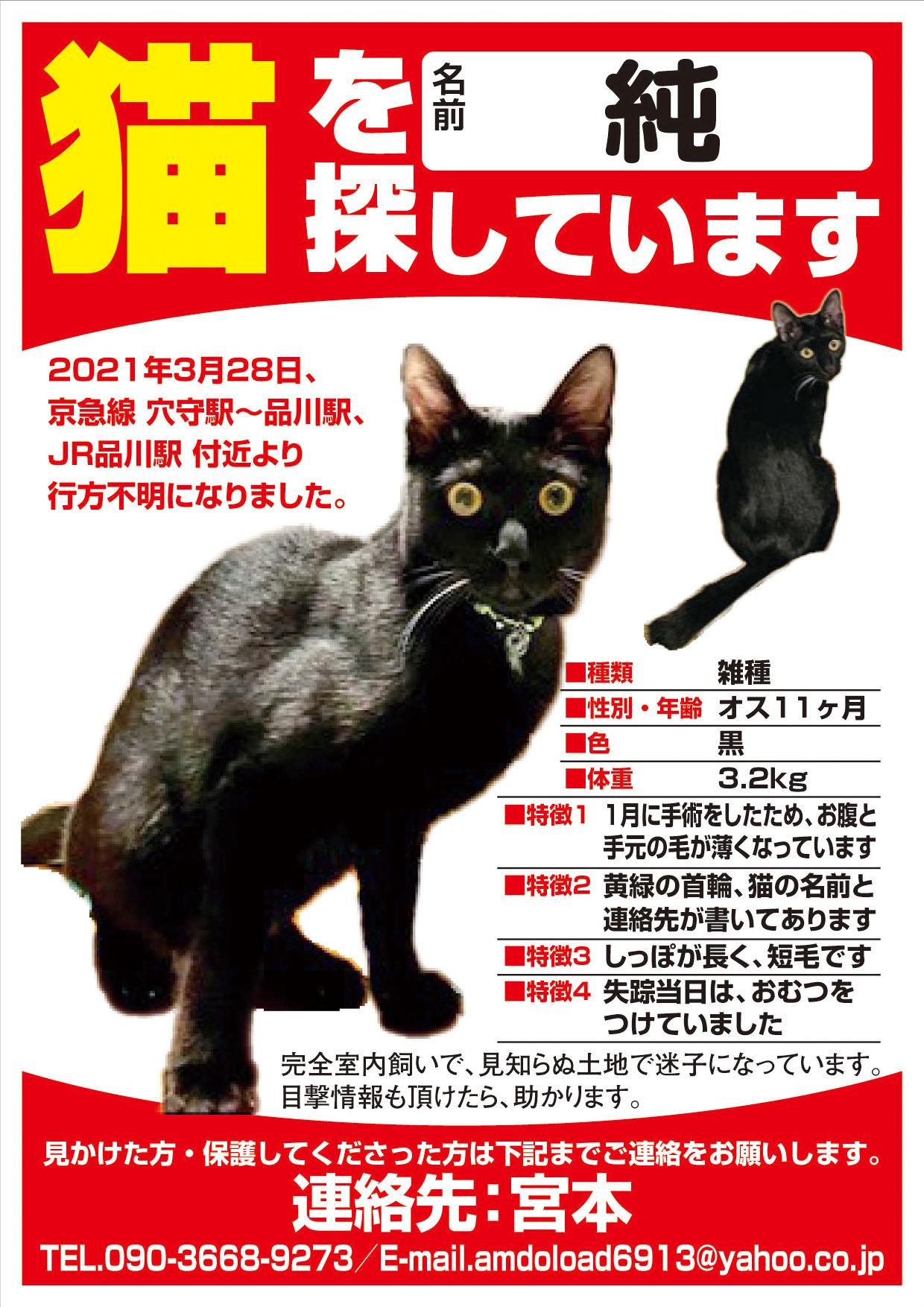 迷い猫 純 君