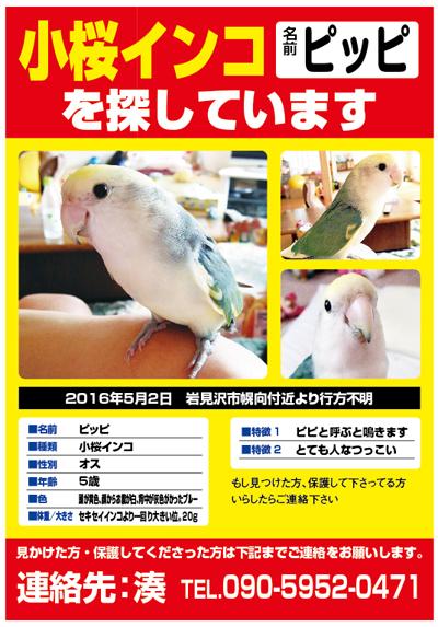 小桜インコ ピッピちゃん